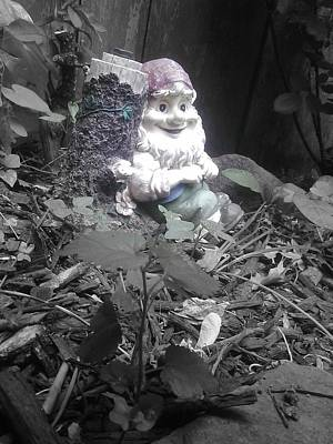 Photograph - I'm So Gnomely by Brynn Ditsche