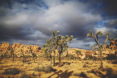 Joshua Tree Photograph - In A Restless World by Laurie Search