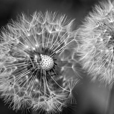 Flowers Photograph - In A Seedy Ditch - Bw by Steve Harrington