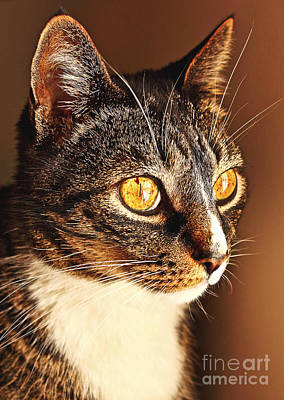 Kitty Photograph - In Deep Thought by Andrew Glisson