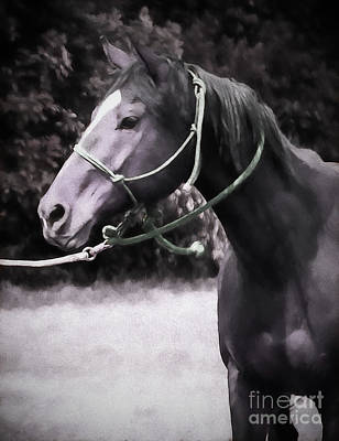 Horse Purse Photograph - In  Express by Jacque The Muse Photography