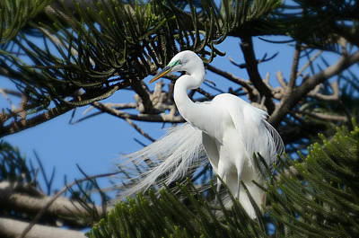 Egret Photograph - In Her Glory by Fraida Gutovich