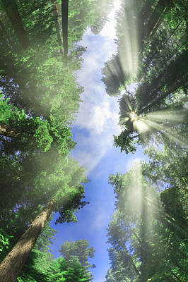 Happy Photograph - in HIS presence - California Redwoods by Scott Campbell