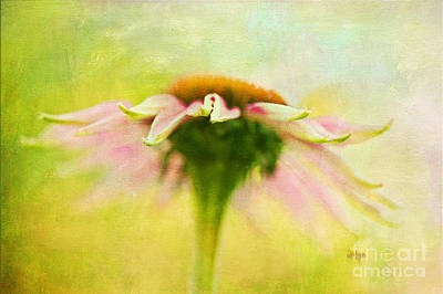 In Perfect Harmony Print by Lois Bryan