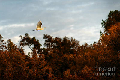 Photograph - In Search Of The Flock by Tamyra Ayles