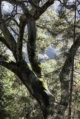 In The Berkeley Hills Original by Suzanne Gaff