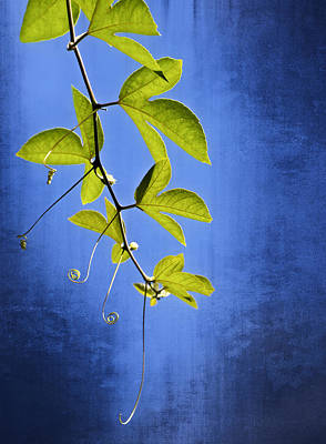 Photograph - In The Blue by Carolyn Marshall