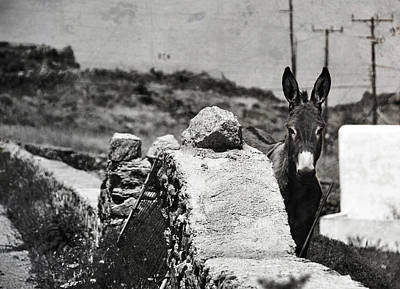 Donkey Photograph - In The Countryside Of Mykonos by Laura Melis