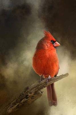 Red Photograph - In The January Sun by Jai Johnson