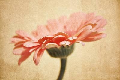Purple Flowers Digital Art - In The Pink by Cathie Tyler