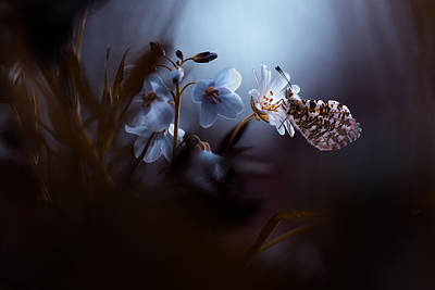 Insect Photograph - In Your Dreams, Everything Is Alright by Fabien Bravin