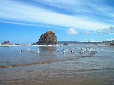 Clouds Photograph - Incoming Tide - Cannon Beach by Lori Seaman