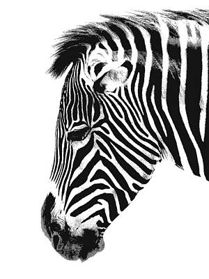 Zebra Digital Art - India Ink Zebra Head by Daniel Hagerman