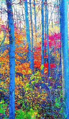 Indiana Autumn Woods Image Print by Paul Price