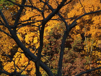 Indiana Landscapes Photograph - Indiana Fall by Michael L Kimble