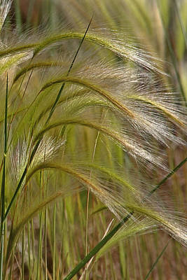 Great Photograph - Indiangrass Swaying Softly With The Wind by Christine Till