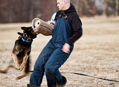 Dog Photograph - Inertia by Susan  Coppola