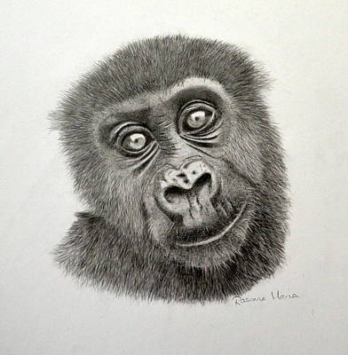 Rainforest Drawing - Infant Western Lowland Gorilla by Rosanna Maria
