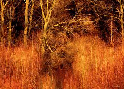 Fury Photograph - Inferno by Wim Lanclus