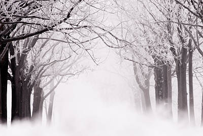Snow Scenes Photograph - Infinity - Trees Covered With Hoar Frost On A Snowy Winter Day by Roeselien Raimond