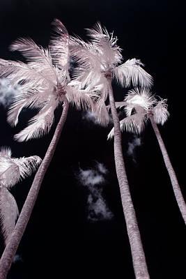 Tropics Photograph - Infrared Palm Trees by Adam Romanowicz