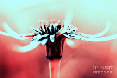 Ir Photograph - Infrared Wildflower by Stelios Kleanthous