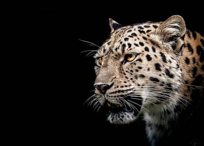 Leopards Photograph - Inner Strength  by Paul Neville