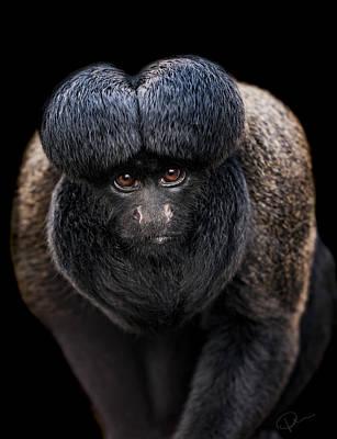 Monkey Photograph - Inquisitive  by Paul Neville