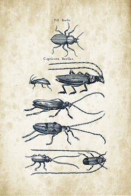 Insects Digital Art - Insects - 1792 - 03 by Aged Pixel