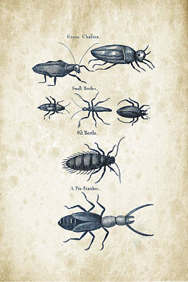 Insects - 1792 - 05 Print by Aged Pixel
