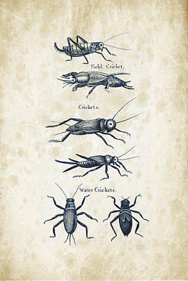 Insects - 1792 - 06 Print by Aged Pixel