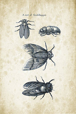 Insects - 1792 - 07 Print by Aged Pixel