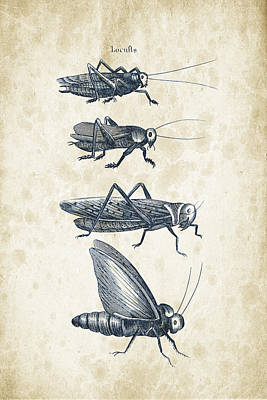 Insects - 1792 - 09 Print by Aged Pixel