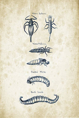 Insects - 1792 - 20 Print by Aged Pixel