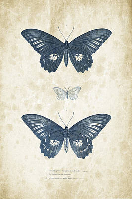 Insects - 1832 - 01 Print by Aged Pixel