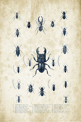 Insects - 1832 - 06 Print by Aged Pixel