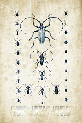 Insects - 1832 - 08 Print by Aged Pixel