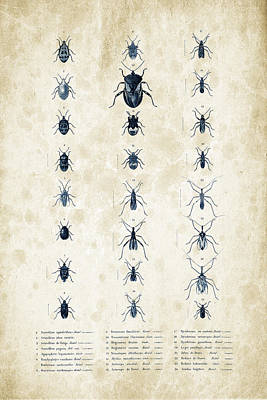 Insects - 1832 - 11 Print by Aged Pixel