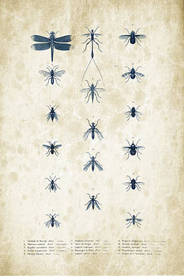 Insects - 1832 - 12 Print by Aged Pixel