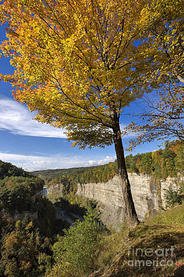 Inspiration Point Print by Louise Heusinkveld