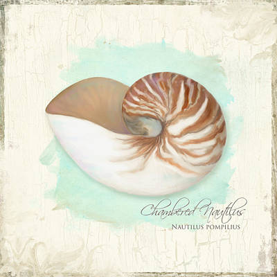 Inspired Coast V - Chambered Nautilus Shell On Board Print by Audrey Jeanne Roberts