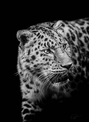 Leopards Photograph - Intent by Paul Neville