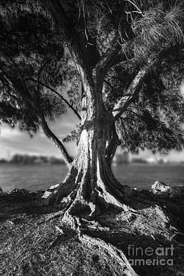 Intercoastal Pine Print by Marvin Spates