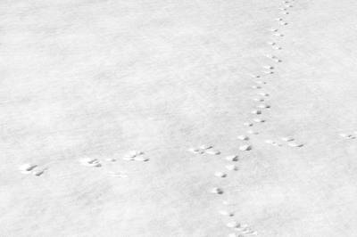 Footprints Photograph - Intersection by Scott Norris