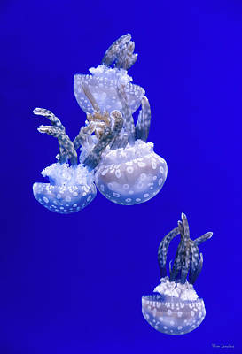 Jellyfish Photograph - Into The Blue by Wim Lanclus