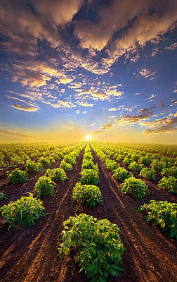 Cabbage Photograph - Into The Future by Phil Koch