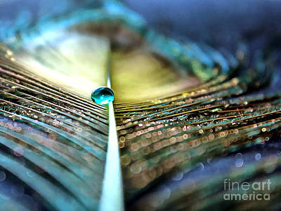 Peacock Photograph - Into The Night by Krissy Katsimbras