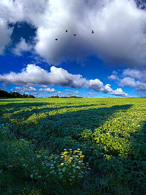 Into The Open Print by Phil Koch