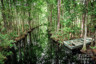 Into The Swamp Print by Joan McCool