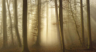 Forest Light Photograph - Into The Trees by Norbert Maier